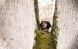 Cão, árvore, musgo, olhar