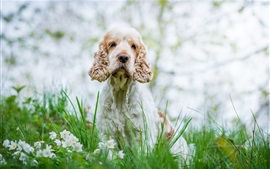 Preview wallpaper Dog, white flowers, grass, bokeh