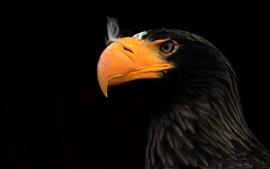 Орел, клюв, черный фон