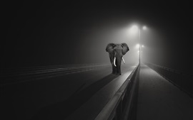 Elephant walk on the bridge, night, lights, black and white picture