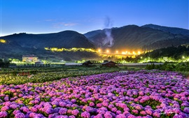 Preview wallpaper Flowers fields, night, houses, lights
