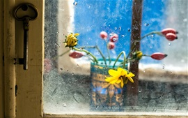 Flowers, window, glass