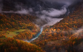 Preview wallpaper Forest, autumn, river, top view, fog