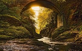 Bosque, puente, río, sol, musgo