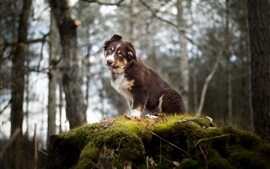 Preview wallpaper Forest, dog, moss