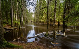 Floresta, rio, árvores