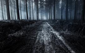 Floresta, estrada, anoitecer, nevoeiro