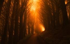 Лес, дорога, свет, туман, утро