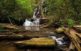 Bosque, corriente, rocas, paisaje de la naturaleza