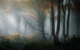 Bosque, árboles, neblina, niebla, mañana