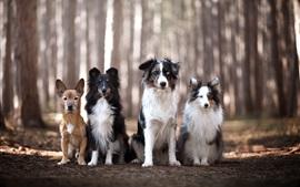 Quatre chiens, amis, forêt