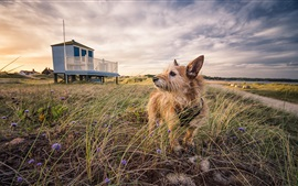 Preview wallpaper Furry dog, grass, house, clouds