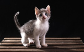 Preview wallpaper Furry kitten, bench