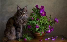 Preview wallpaper Gray cat, purple roses