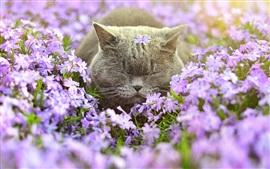 Gatito gris, flores, sueño