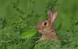Серый кролик, зеленые листья