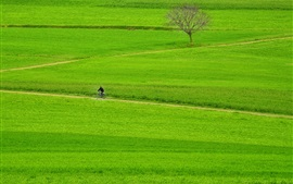 Green fields, farmland