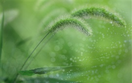 Green grass, water droplets, summer