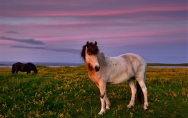 Horses, grass, flowers, dusk