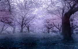 미리보기 배경 화면 일본, 사쿠라, 봄의 공원, 꽃
