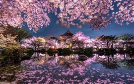 Япония, сакура, деревья, розовые цветы, ночь, пруд, храм, сад