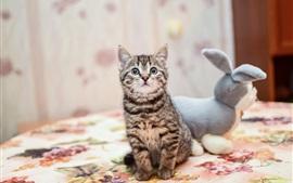 Gatinho e coelho brinquedo