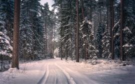 Knyszyn Forest Landscape Park, Polonia, árboles, nieve, invierno