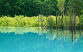 Озеро, деревья, отражение воды