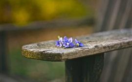 Petites fleurs bleues, banc