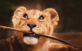 Preview wallpaper Little lion catch a stick