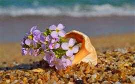Pequenas flores cor de rosa, conchas, pedras