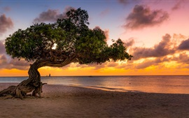 Preview wallpaper Lonely tree, beach, sands, sea, sunset