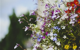 Lot of flowers, purple, white, blue