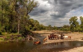 Viele Pferde, Fluss, Bäume, Wolken