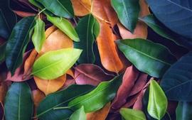 多くの葉、緑、黄色、赤、テクスチャの背景