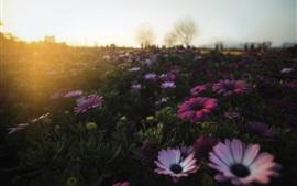 Manhã, flores, sol