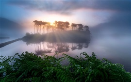 Morning, lake, island, trees, fog