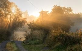 Aperçu fond d'écran Matin, arbres, brouillard, rayons de soleil, route