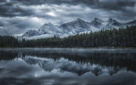 Montanhas, floresta, árvores, névoa, rio, manhã