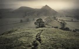 Горы, холмы, деревья, туман, утро