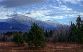 Montanhas, árvores, grama, céu azul, nuvens