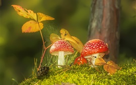Preview wallpaper Mushrooms, amanita, ants, spider, web, leaves