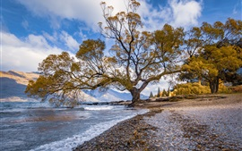 New Zealand, lake, waves, stones, trees
