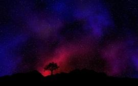 Noite, árvore, estrelado, céu, estrelas