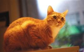 Gato naranja mirarte, fondo borroso