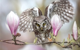Owl and magnolia flowers