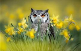 Owl, daffodils