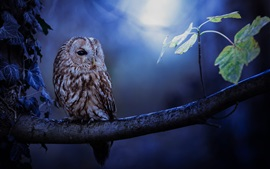 Coruja, noite, árvore, folhas
