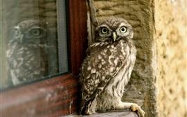 フクロウは窓の上に座る