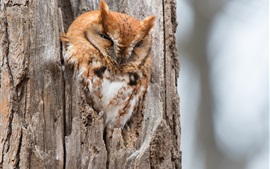 Preview wallpaper Owl, tree, hollow